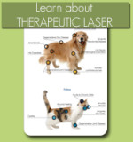 Laser therapy for cats and dogs is available at Kodiak Veterinary Hospital.